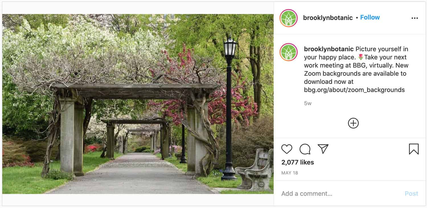 Brooklyn Botanic Garden: one of the best places in New York to propose